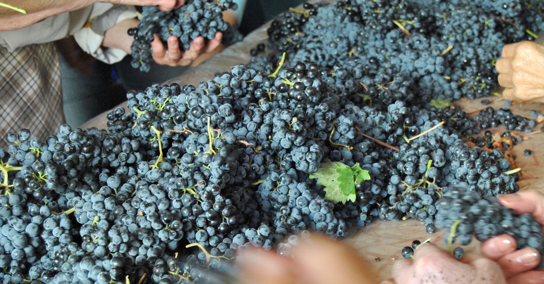 Quinta las Velas - Uvas
